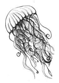 imajenes de medusas