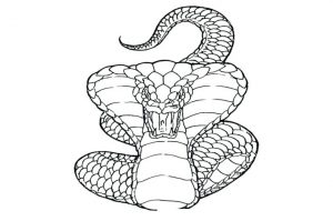 imajenes de serpientes