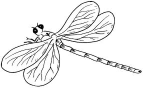 insectos en dibujo