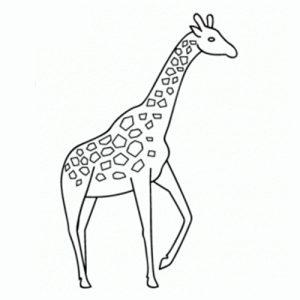 jirafa caricatura
