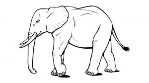 mandalas con elefantes