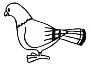 modelos de palomas