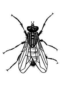 mosca para colorear