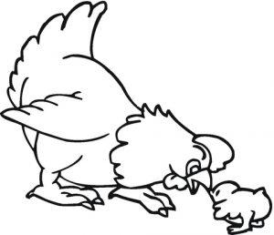 pollo para dibujar