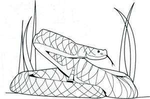 serpiente colorear