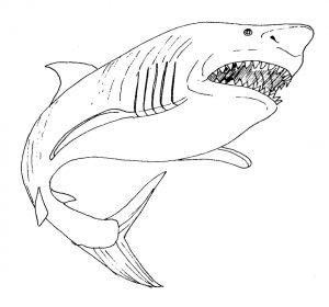 tiburon para colorear