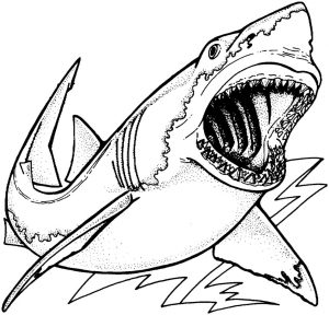 tiburon para dibujar