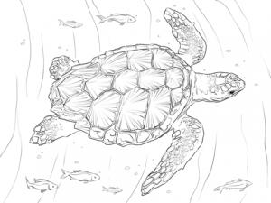 tortuga dibujo infantil