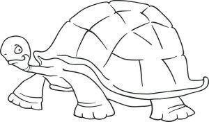 tortuga facil de dibujar