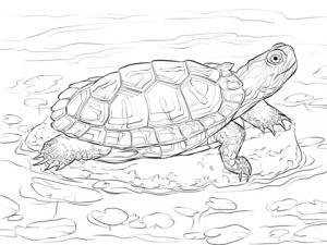 tortuga marina para colorear