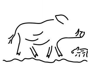 imagenes de jabalies salvajes
