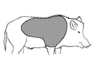 logo jabali