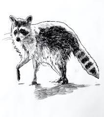 caricatura de mapache