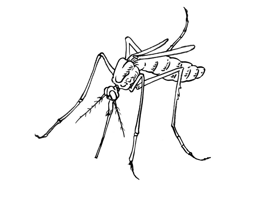 dibujos de mosquitos animados