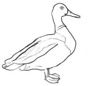 figuras de patos