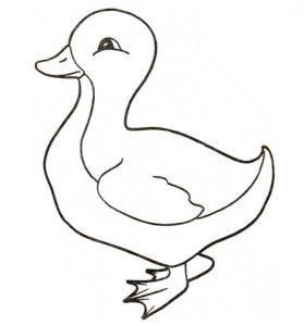 fotos de patos