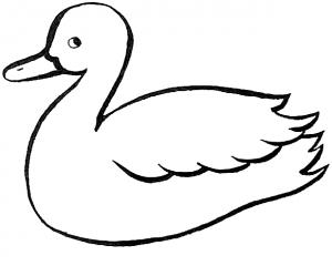 imagenes de patos