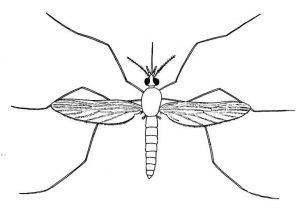 mosquito para colorear