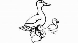 videos del pato donald
