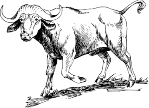 bufalo caricatura