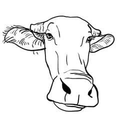 bufalo para dibujar