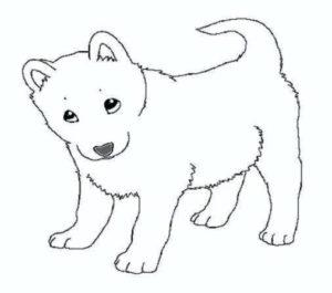 cachorros para colorear
