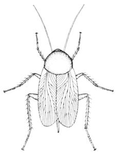 caricaturas de cucarachas