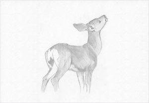 ciervo dibujo animado