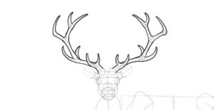 ciervo para dibujar
