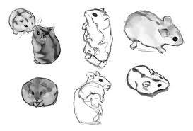 como dibujar hamsters