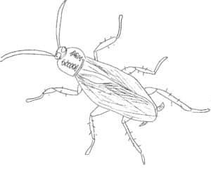 cucaracha gif