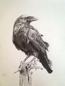 cuervo para colorear