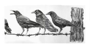 cuervo para dibujar