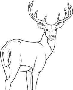 dibujo cabeza ciervo