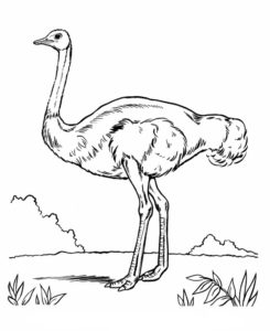 dibujo de avestruz para colorear