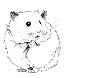 dibujo de un hamster