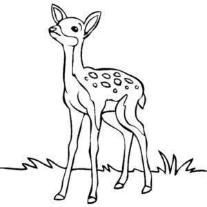 dibujos a lapiz de ciervos