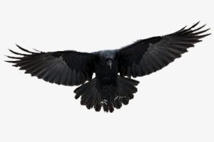 dibujos de cuervos para imprimir