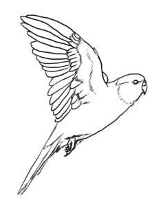 dibujos de loros para dibujar