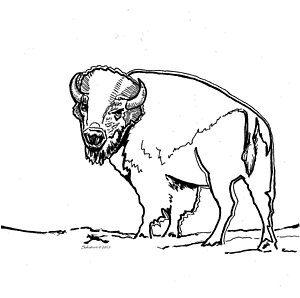 dibujos para colorear de bufalos