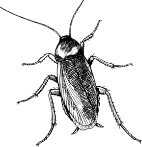 figuras de cucarachas