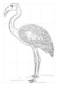 flamingo para colorear