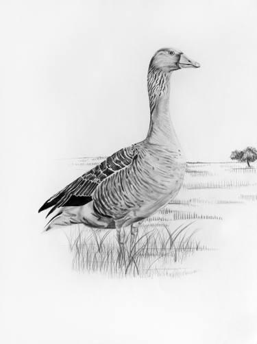 foto de un ganso