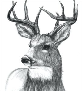 fotos de ciervos