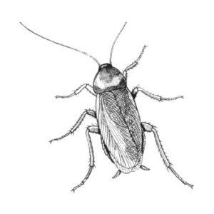fotos de cucarachas gigantes