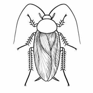 fotos de cucarachas grandes