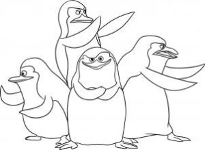 fotos pinguinos
