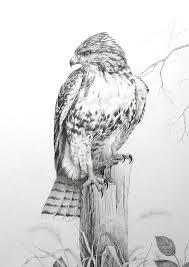 halcon dibujo facil