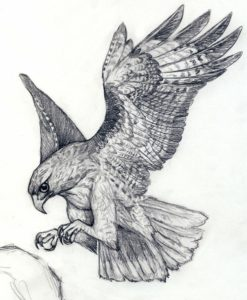 halcon imagenes