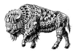 imagenes de bufalos africanos